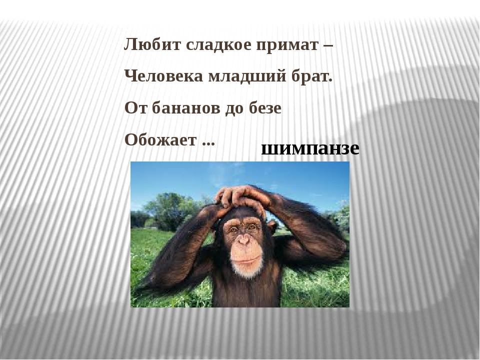 Любит сладкое примат – Человека младший брат. От бананов до безе Обожает ......