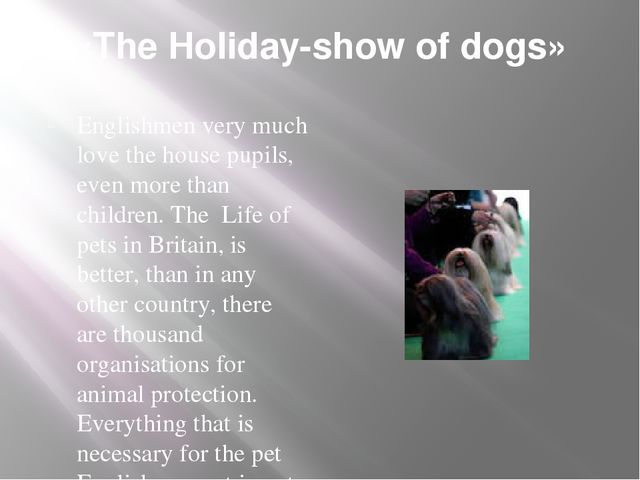 «The Holiday-show of dogs» Englishmen very much love the house pupils, even m...