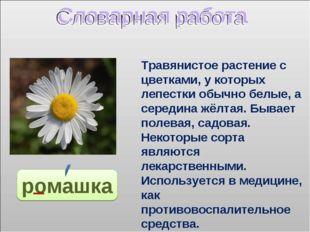 ромашка Травянистое растение с цветками, у которых лепестки обычно белые, а с