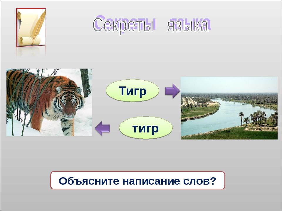 тигр Тигр Объясните написание слов?