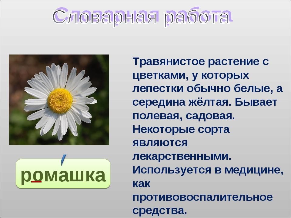 ромашка Травянистое растение с цветками, у которых лепестки обычно белые, а с...