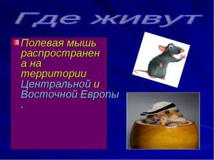 Полевая мышь распространена на территорииЦентральнойиВосточной Европы.