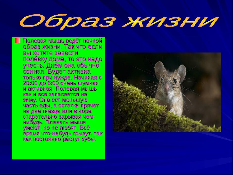 Полевая мышь ведёт ночной образ жизни. Так что если вы хотите завести полёвку...