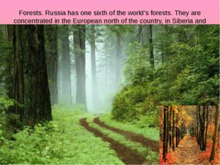 Forests. Russia has one sixth of the world's forests. They are concentrated i