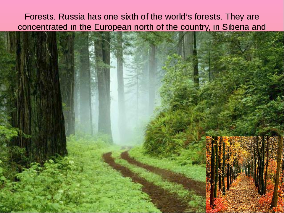 Forests. Russia has one sixth of the world's forests. They are concentrated i...