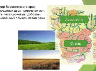 Зеленый мир Воронежского края, Растет в пределах двух природных зон. Здесь ес
