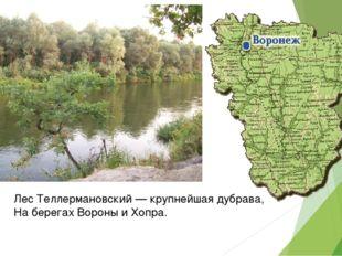 Лес Теллермановский — крупнейшая дубрава, На берегах Вороны и Хопра.