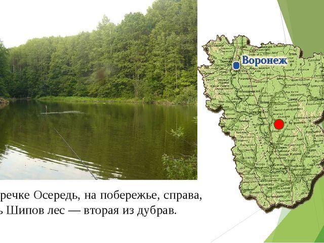 На речке Осередь, на побережье, справа, Есть Шипов лес — вторая из дубрав.