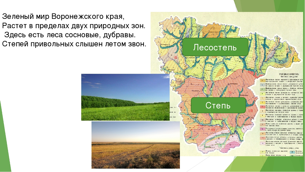 Зеленый мир Воронежского края, Растет в пределах двух природных зон. Здесь ес...