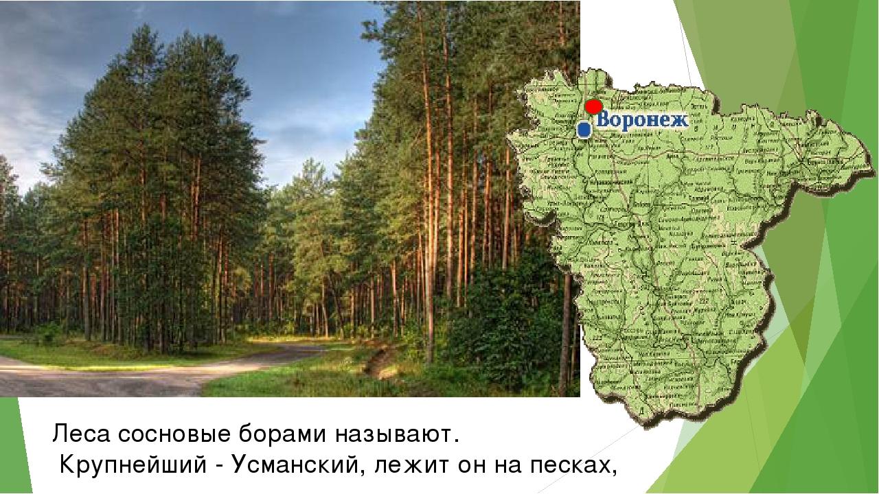 Леса сосновые борами называют. Крупнейший - Усманский, лежит он на песках,