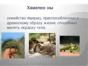 Хамелео́ны семействоящериц, приспособленных к древесному образу жизни, спо