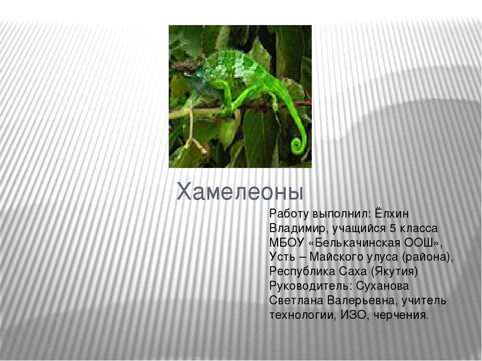Хамелеоны Работу выполнил: Ёлхин Владимир, учащийся 5 класса МБОУ «Белькачинс...