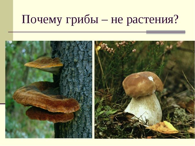 Почему грибы – не растения?