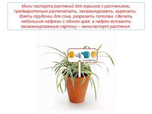 Мини паспорта растений для горшков с растениями, предварительно распечатать,