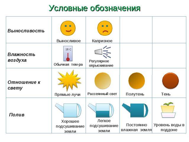 Условные обозначения Влажность воздуха Отношение к свету Выносливость Полив В...