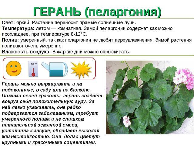 ГЕРАНЬ (пеларгония) Герань можно выращивать и на подоконнике, в саду или на б...
