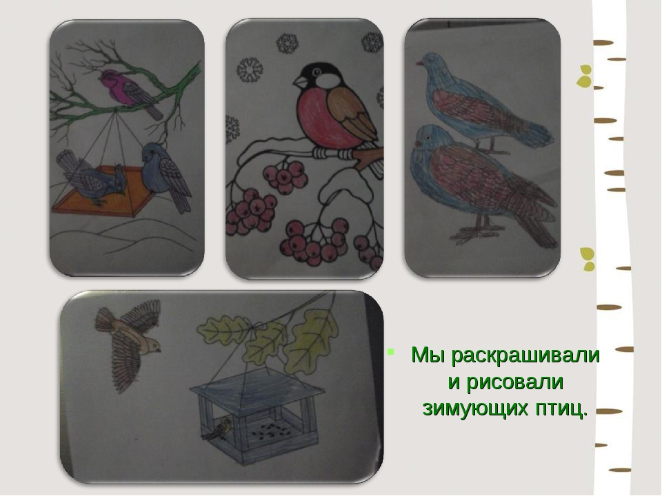 Мы раскрашивали и рисовали зимующих птиц.