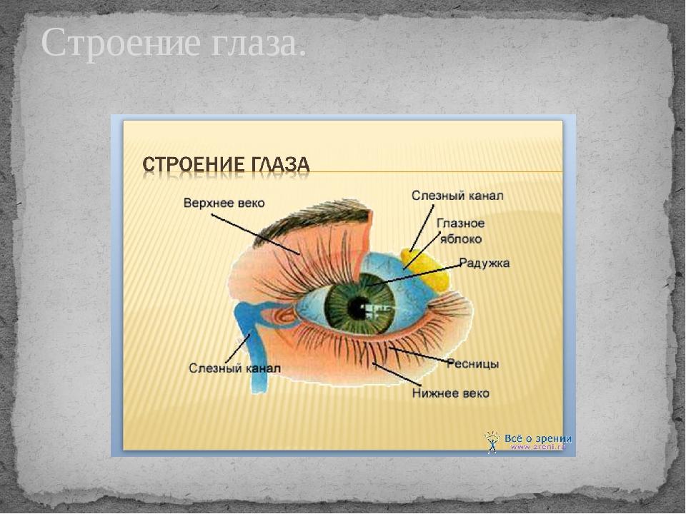 На презентация травмы тему глаз