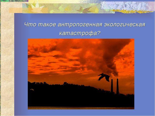 Что такое антропогенная экологическая катастрофа?