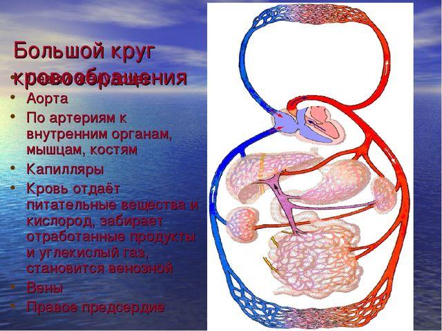 Большой круг кровообращения Левый желудочек Аорта По артериям к внутренним ор...