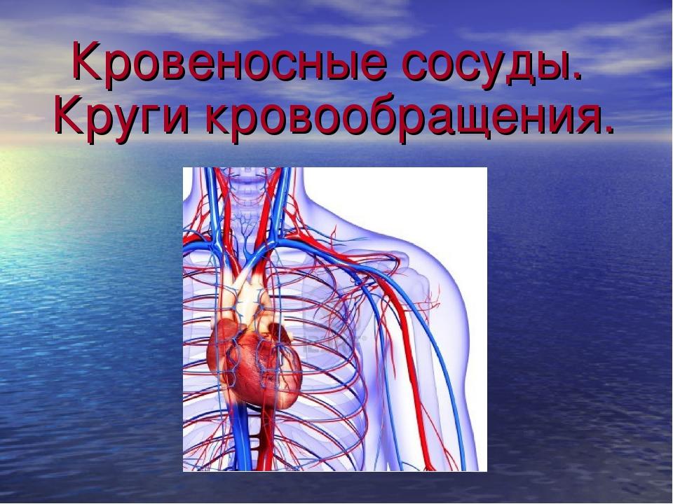 Кровеносные сосуды. Круги кровообращения.
