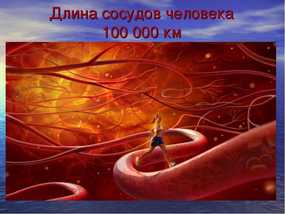 Длина сосудов человека 100 000 км