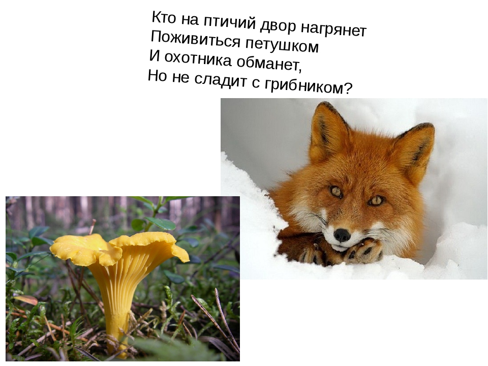 Кто на птичий двор нагрянет Поживиться петушком И охотника обманет, Но не сла...