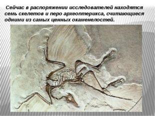 Сейчас в распоряжении исследователей находятся семь скелетов и перо археопте