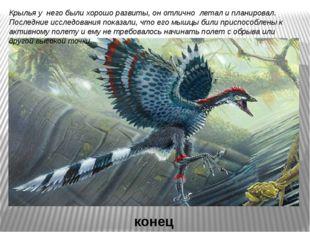 Крылья у него были хорошо развиты, он отлично летал и планировал. Последние и