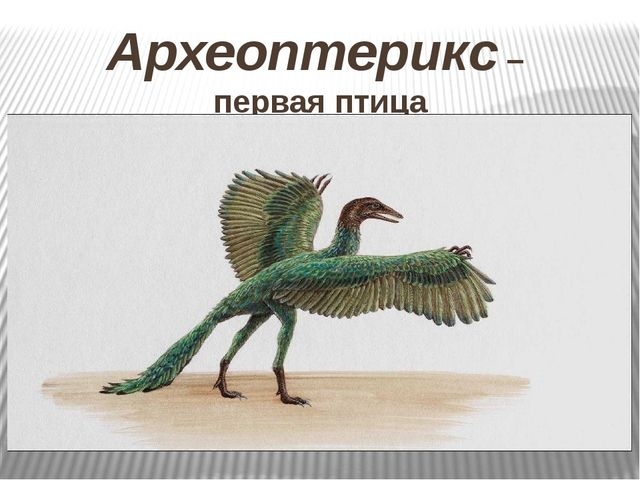 Археоптерикс – первая птица