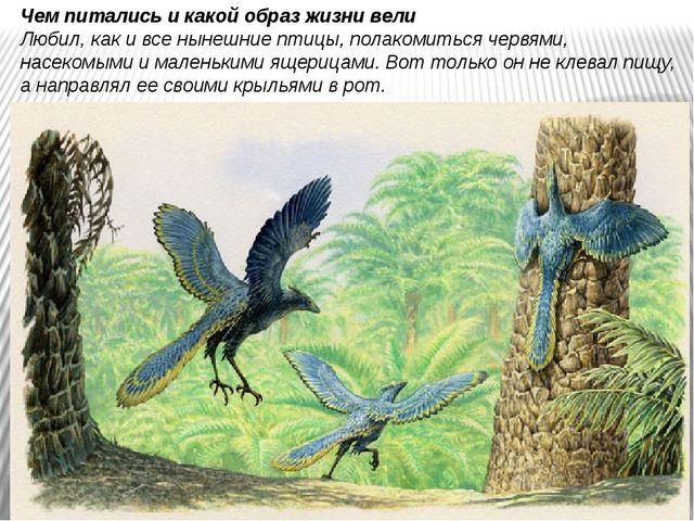 Чем питались и какой образ жизни вели Любил, как и все нынешние птицы, полак...