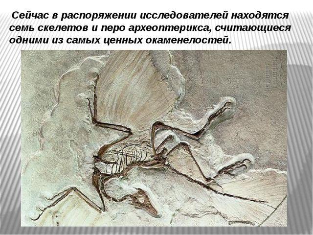 Сейчас в распоряжении исследователей находятся семь скелетов и перо археопте...