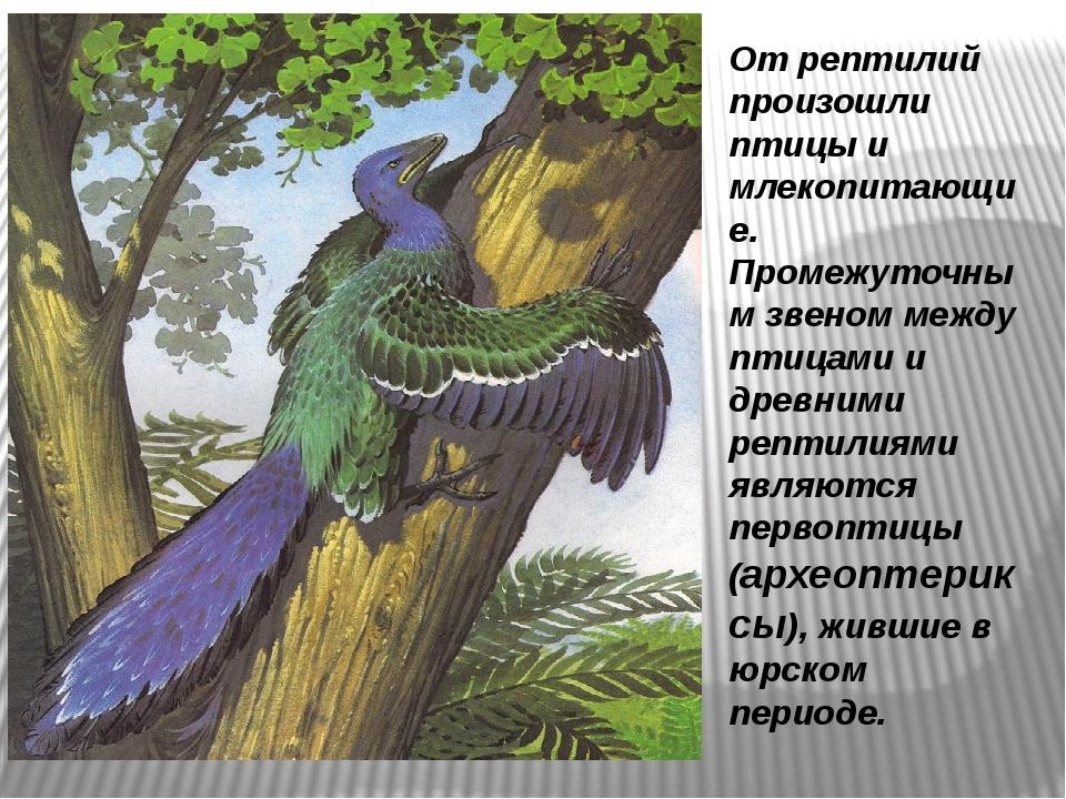 От рептилий произошли птицы и млекопитающие. Промежуточным звеном между птица...