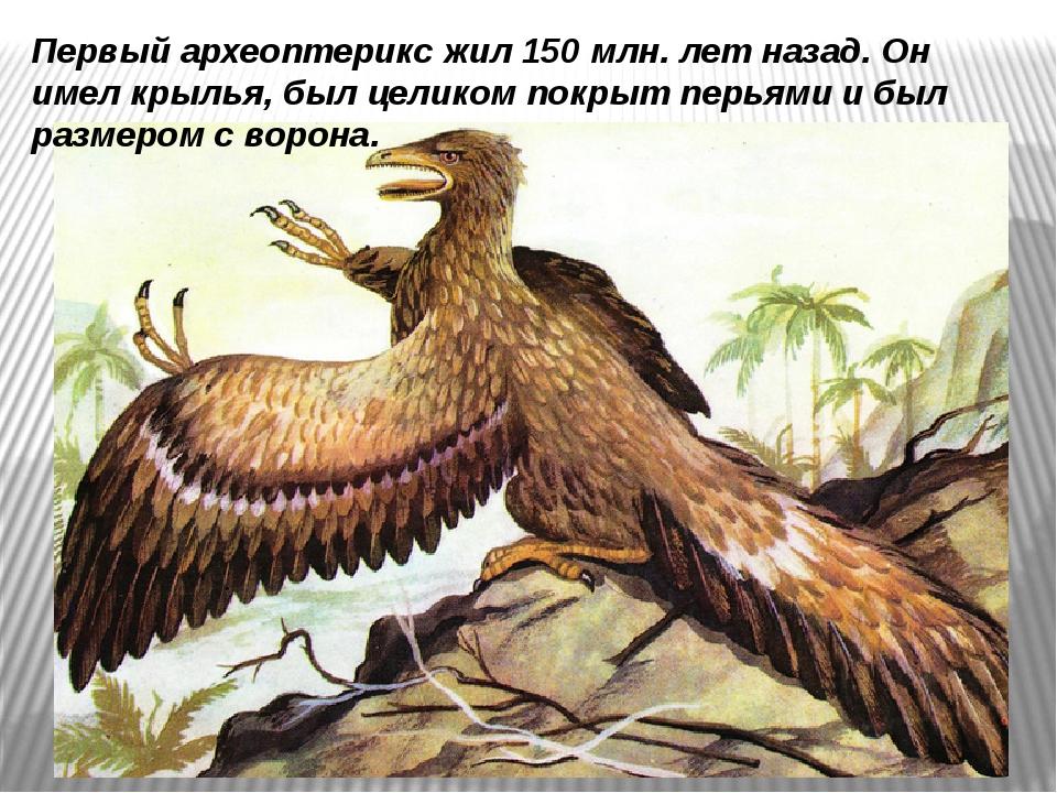 Первый археоптерикс жил 150 млн. лет назад.Он имел крылья, был целиком покры...