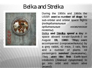Belka and Strelka During the 1950s and 1960s the USSR used a number of dogs f