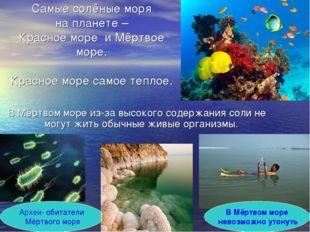 Самые солёные моря на планете – Красное море и Мёртвое море. Красное море сам