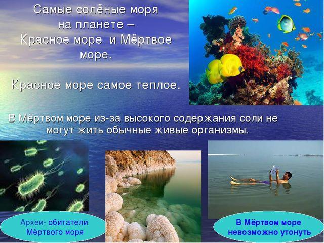 Самые солёные моря на планете – Красное море и Мёртвое море. Красное море сам...