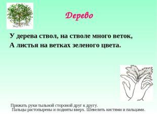 Дерево У дерева ствол, на стволе много веток, А листья на ветках зеленого цве