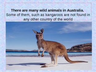 There are many wild animals in Australia. Some of them, such as kangaroos ar