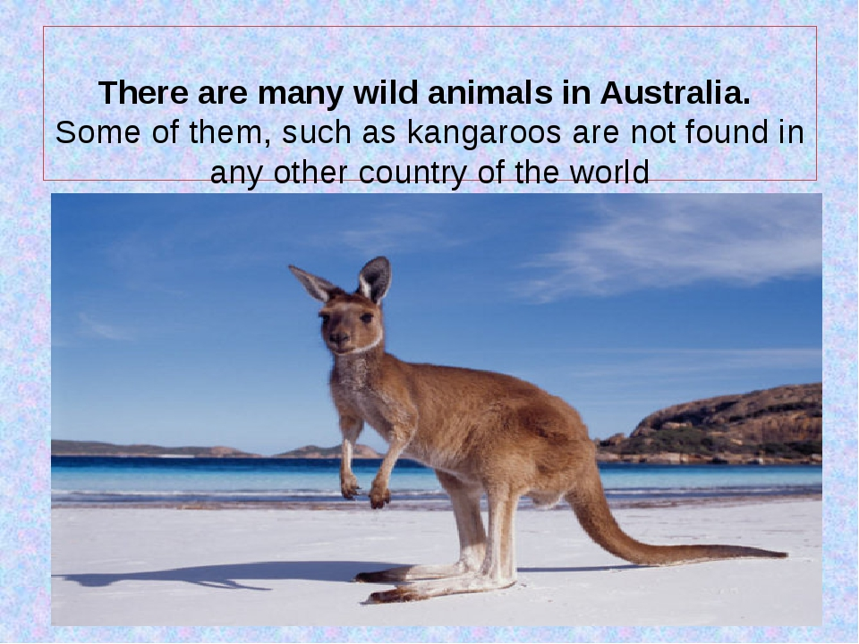 There are many wild animals in Australia. Some of them, such as kangaroos ar...
