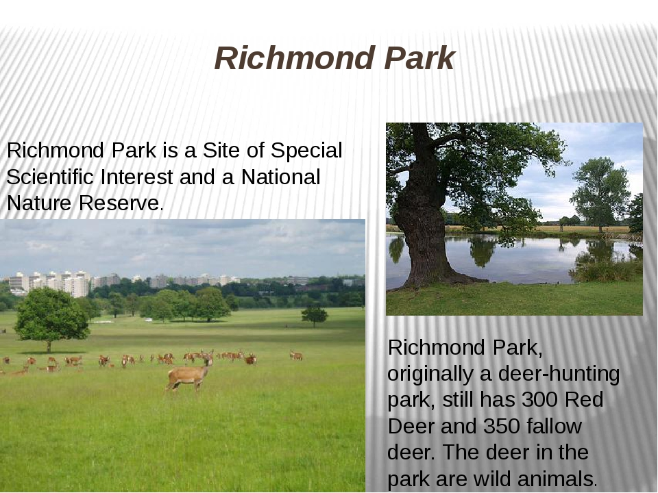 Richmond Park Richmond Park is a Site of Special Scientific Interest and a Na...