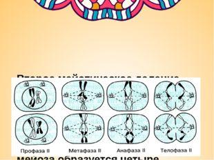 Второе мейотическое деление идет по типу митоза. В анафазе 2 к полюсам расхо