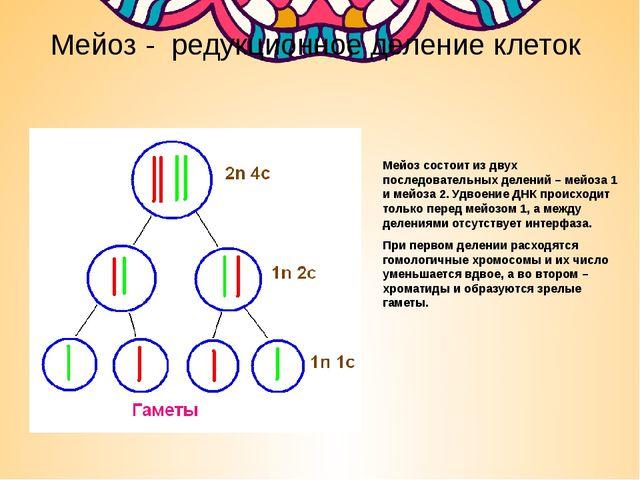 Мейоз - редукционное деление клеток Мейоз состоит из двух последовательных де...
