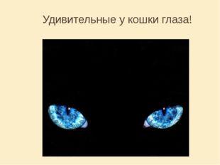 Удивительные у кошки глаза!