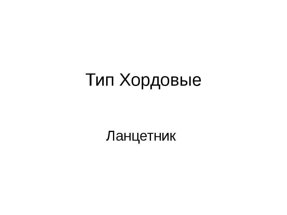 Тип Хордовые Ланцетник