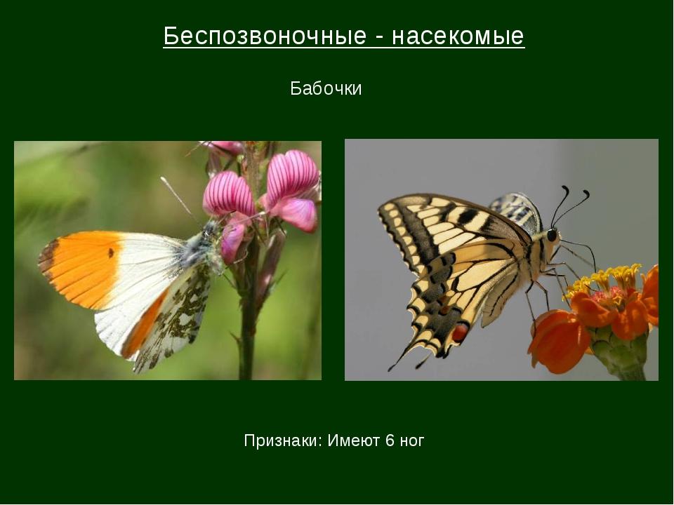Беспозвоночные - насекомые Бабочки Признаки: Имеют 6 ног