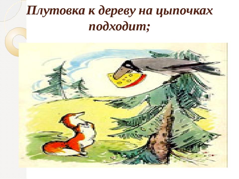 Плутовка к дереву на цыпочках подходит;