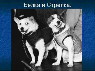 Белка и Стрелка.