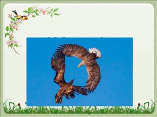 НАЗОВИ ПАРУ орлица орёл