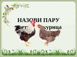 НАЗОВИ ПАРУ петух курица